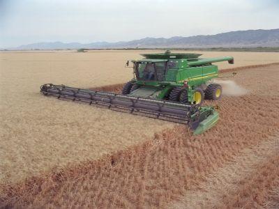maramures-fermierii-locali-multumiti-de-productia-de-orz-si-ovaz