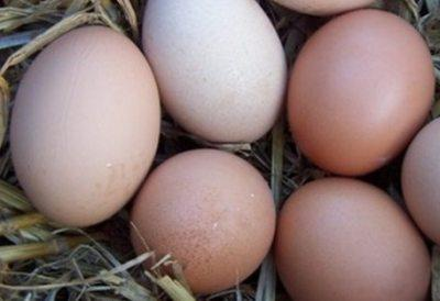 ialomitenii-s-au-inghesuit-la-pui-de-o-zi-iar-avicola-lumina-a-instalat-primul-automat-de-oua-din-judetul-constanta