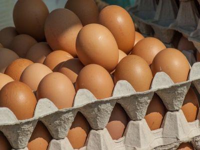 peste-4-milioane-de-oua-contaminate-cu-insecticid-descoperite-intr-o-ferma-din-teleorman