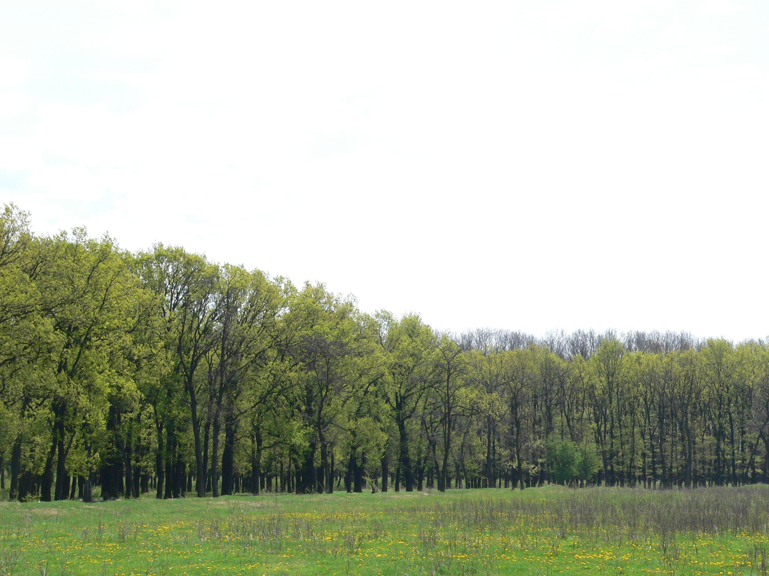unde-mai-fugim-de-acasa-despre-padurile-din-jurul-bucurestiului-si-ce-plante-poti-descoperi-in-ele