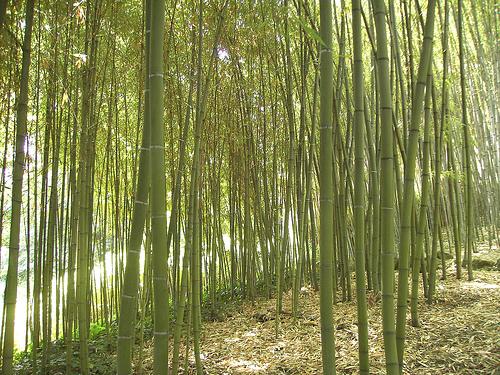 o-mie-de-lucruri-realizate-din-bambus