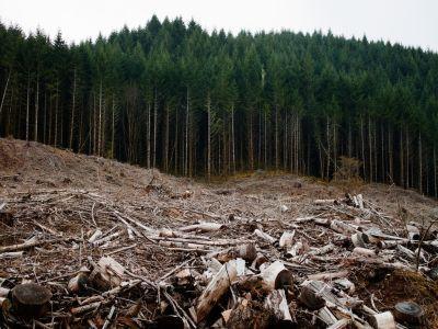 furtunile-din-ultimele-zile-au-distrus-peste-700-de-hectare-de-padure