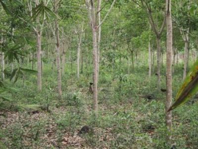 fonduri-de-la-apdrppentru-impadurirea-terenurilor-agricole