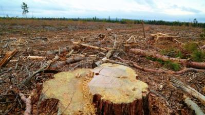sectorului-forestier-romanesc-un-model-pentru-alte-domenii