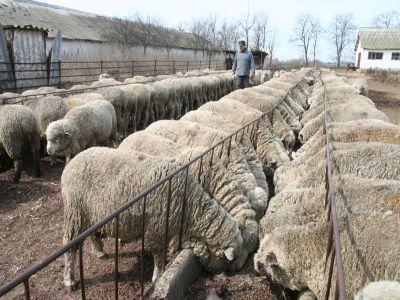 institutul-de-cercetare-dezvoltare-pentru-cresterea-ovinelor-si-caprinelorde-la-palas-se-reorganizeaza