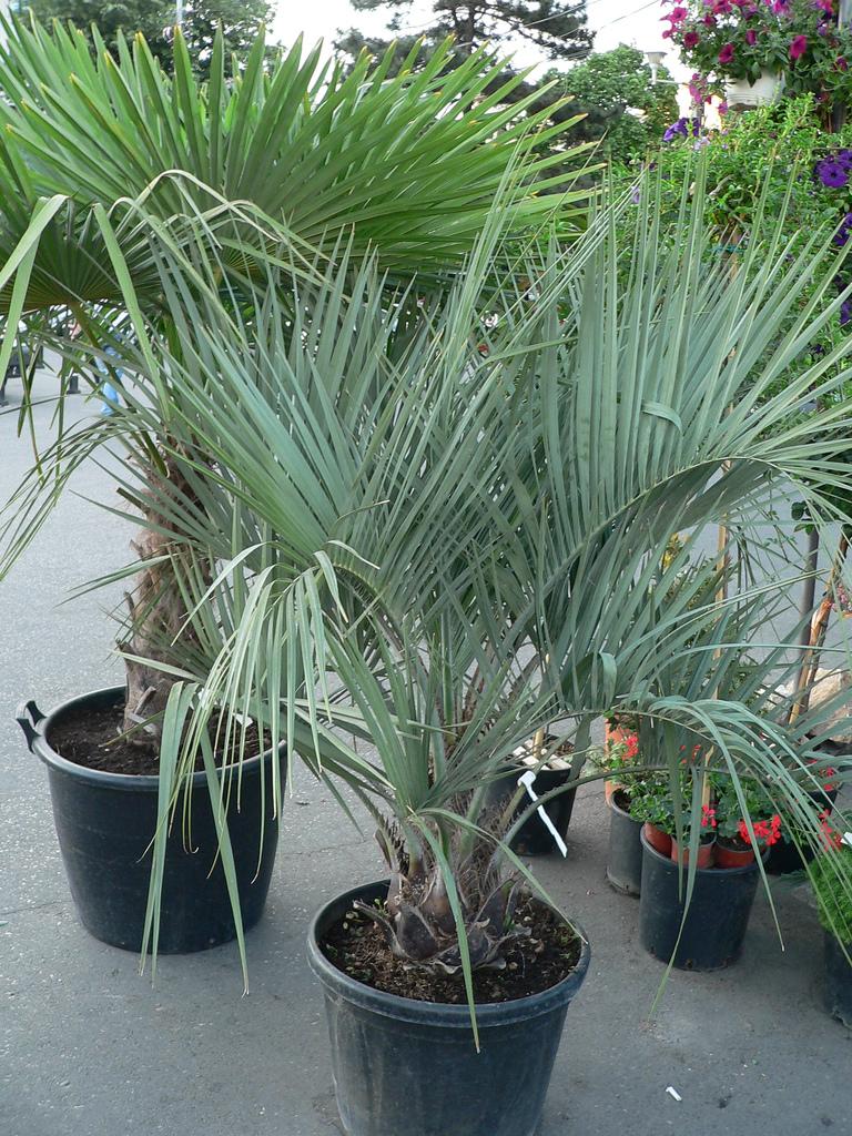 cum-ar-trebui-sa-cumparati-plante-sfaturi-pentru-alegerea-si-pozitionarea-plantelor-de-apartament