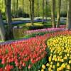 Gradinile Keukenhof din Lisse şi milioanele de bulbi care înfloresc în fiecare an