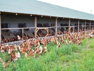 uniunea-crescatorilor-de-pasari-cere-sprijinul-autoritatilor-pentru-combaterea-practicilor-comerciale-neloiale