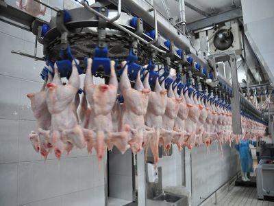 romania-importa-tot-mai-multa-carne-de-pasare-si-trimite-tot-mai-putin-la-export