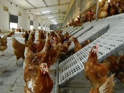 apia-primeste-cereri-de-plata-in-cadrul-masurii-privind-bunastarea-animalelor