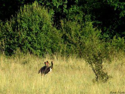 ce-plati-compensatorii-pot-primi-fermierii-pentru-protejarea-unor-specii-de-pasari