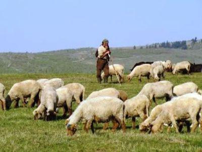 reglementari-noi-privind-pasunatul-animalelor