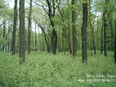 ce-sunt-perdelele-forestiere-si-cum-sunt-ele-de-folos-agriculturii