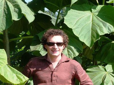 paulownia-arborele-inteligent