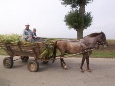 profilul-pensionarului-roman-la-tara-muncind-in-continuare