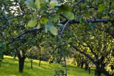prima-pepiniera-de-pomi-fructiferi-din-soiuri-traditionale-din-judetul-sibiu