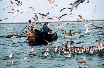 discutii-privind-dezvoltarea-zonelor-pescaresti
