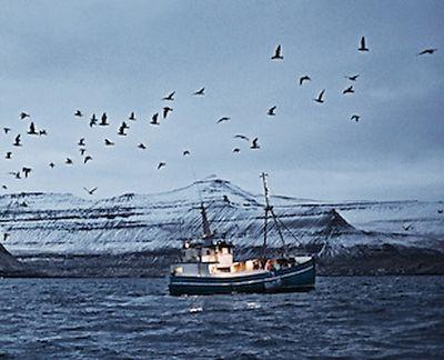 comisia-europeana-ii-sanctioneaza-pe-pescarii-feroezi