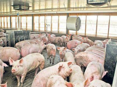 situatia-actualizata-a-focarelor-de-pesta-porcina-africana
