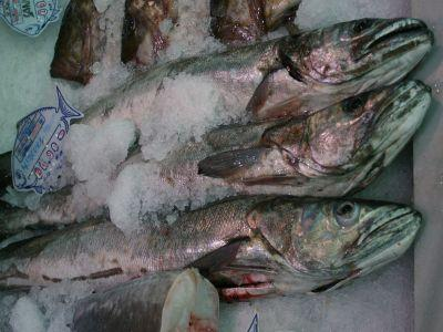 pescarii-din-delta-nu-cred-in-eficienta-bursei-de-peste