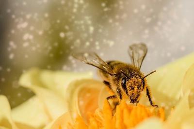 petitie-pentru-interzicerea-pesticidelor-sintetice-si-salvarea-albinelor