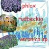 <i>Mai e puțin până în iunie:</i> <br>Fă-ți planul grădinii de vară cu rudbeckia, phlox și veronica