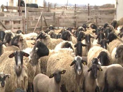 cererile-pentru-ajutorul-de-stat-in-sectorul-cresterii-animalelor-pe-2019-se-depun-pana-pe-17-decembrie