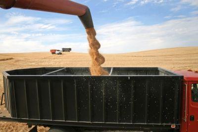care-sunt-traderii-de-cereale-aflati-in-vizorul-consiliului-concurentei