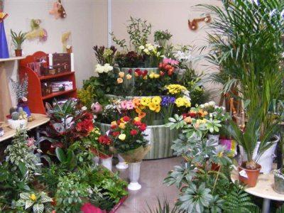 statistici-piata-florilor-2012