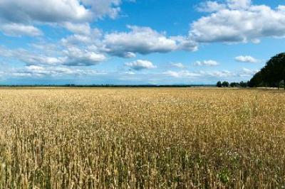 liberalizarea-pietei-funciare-va-impune-conditii-strainilor-care-vor-pamant-romanesc