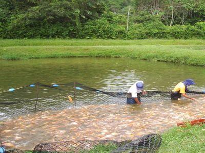 sectorul-piscicol-produce-extrem-de-putin-raportat-la-totalul-de-700000-de-hectare-de-luciu-de-apa
