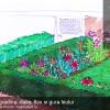 Plan de grădină simplu și colorat: O grădina cu flox, dalie și gura leului