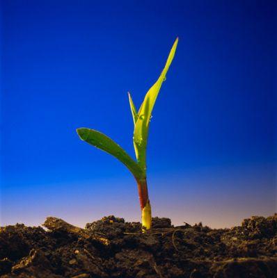 soluri-acide-soluri-alcaline-ce-inseamna-acesti-termeni-ce-inseamna-ph-ul-solului-care-sunt-valorile-de-ph-potrivite-pentru-plante