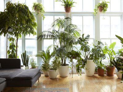 ingrijirea-pantelor-de-apartament-in-sezonul-rece