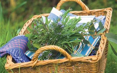mirodenii-si-condimente-arome-mereu-proaspete-in-bucatarie