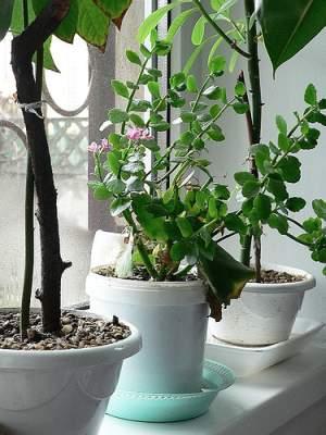 practic-pentru-casa-ta-plantele-de-pe-pervaz-si-ferestrele-de-tip-termopan