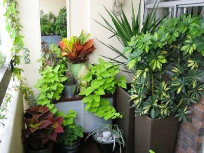 cum-se-ingrijesc-plantele-de-apartament-in-sezonul-rece