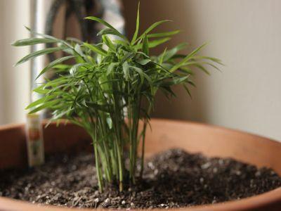 ingrijirea-de-primavara-a-plantelor-de-apartament
