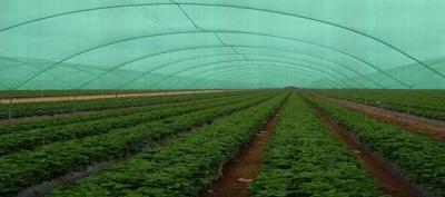 plasa-de-umbrire-si-schimbarile-climaterice-ce-ne-poate-oferi-aceast-accesoriu-in-productia-de-legume