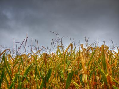 in-ce-regiuni-va-ploua-in-prima-parte-a-lunii-august