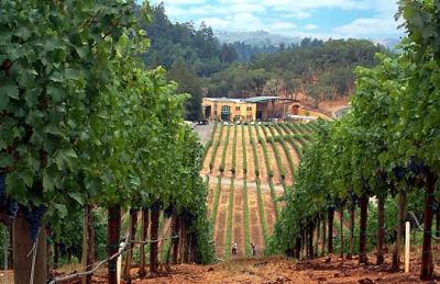 programul-national-de-sprijin-2014-2018-pe-sectorul-vitivinicol-masura-de-promovare-a-vinurilor-poate-beneficia-de-cofinantare-de-la-bugetul-de-stat-in-cuantum-de-30