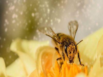 apicultori-din-toata-lumea-vin-la-bucurestipentru-a-marcaziua-mondiala-a-albinei