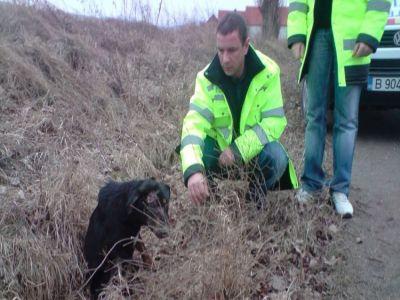 Guvernul a aprobat infiintarea Politiei Animalelor