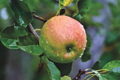 pomii-fructiferi-si-sezonul-rece-la-ce-suntem-acum-atenti