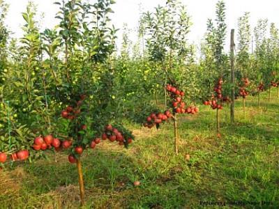 pomicultorii-prahoveni-au-sarbatorit-drumul-fructelor