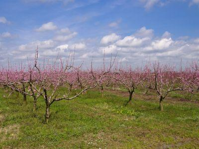 buletin-agrometeorologic-pentru-perioada-19-25-aprilie