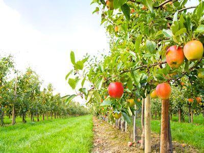 afir-a-prelungit-termenul-de-primire-a-proiectelor-de-dezvoltare-a-fermelor-mici-si-investitii-in-exploatatii-pomicole-in-zona-deltei-dunarii