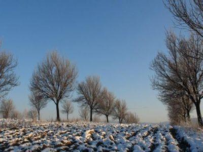 cum-protejam-pomii-din-livada-impotriva-rozatoarelor-in-sezonul-rece