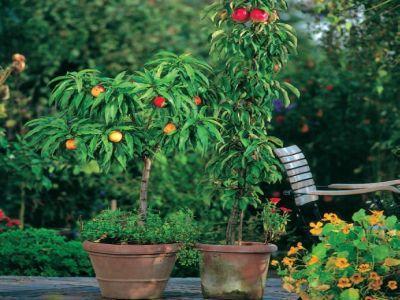 Doriti o livada cu pomi fructiferi pitici? Va spunem tot ce trebuie sa stiti