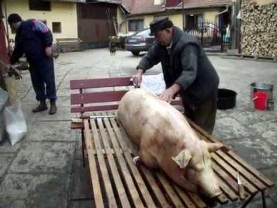 aproape-un-milion-de-porci-ajung-pe-mesele-romanilor-de-craciun